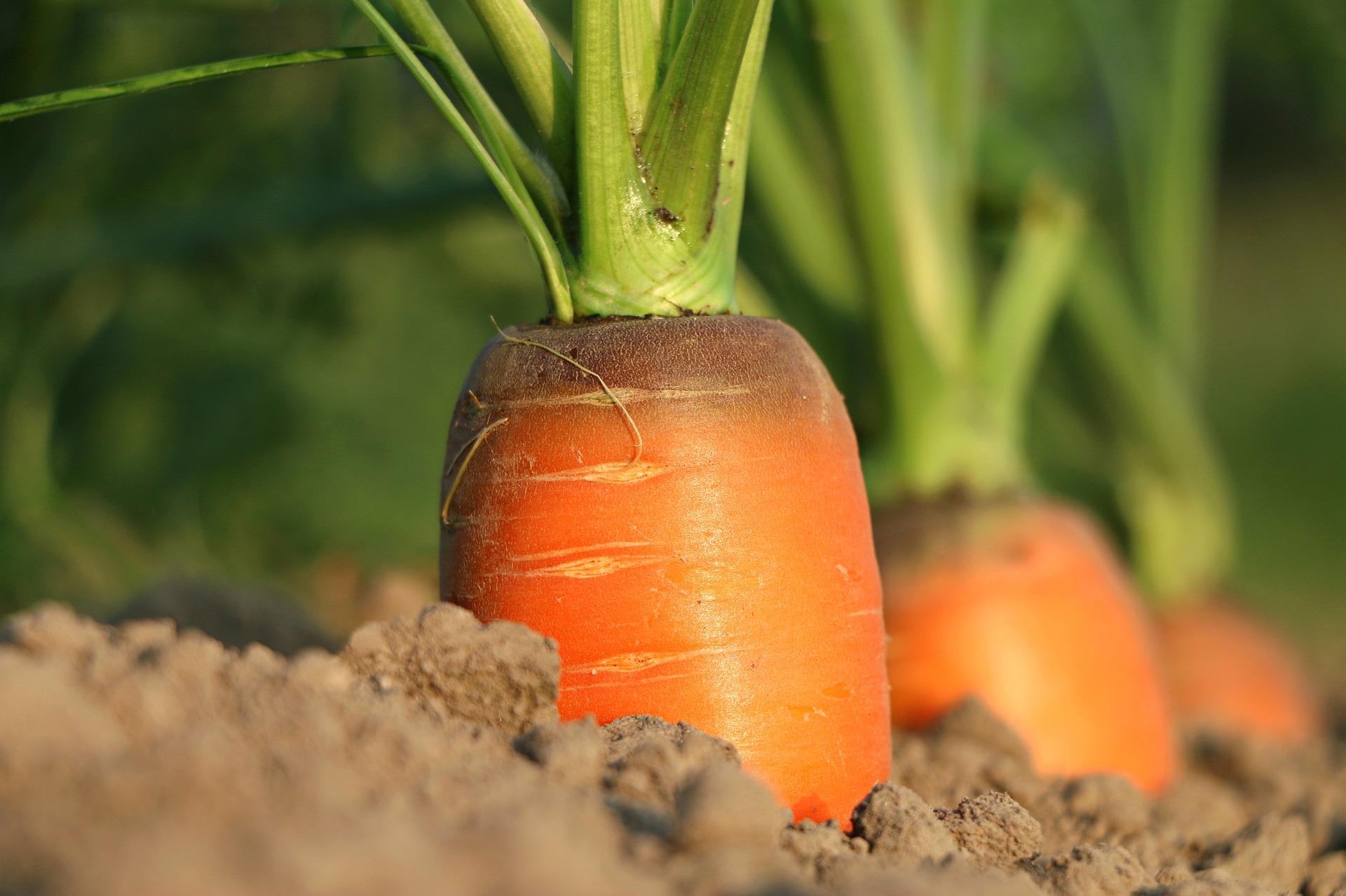 carrot 1565597 1920