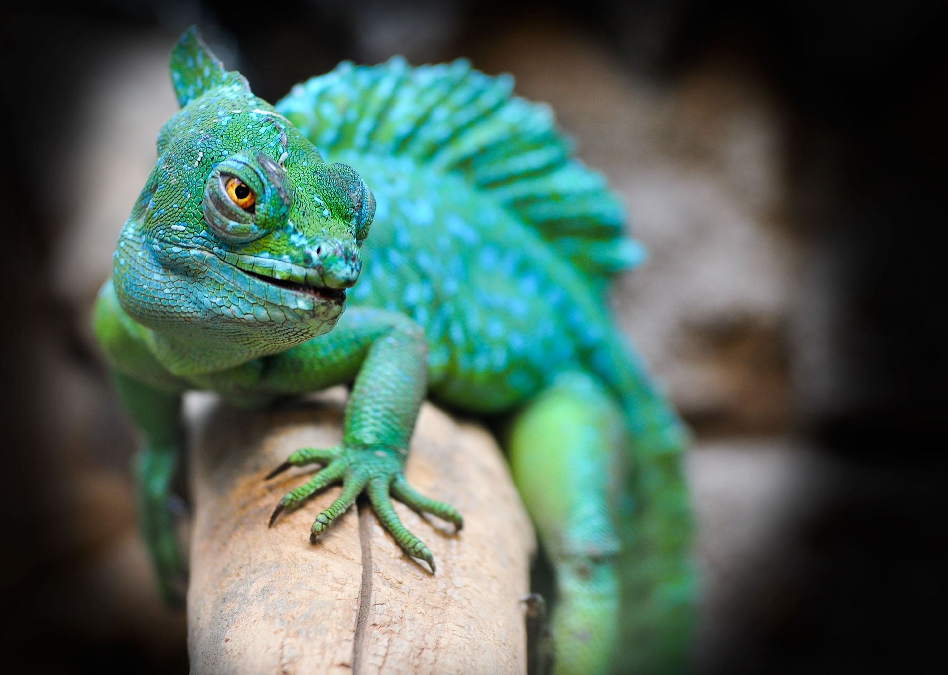 reptile 2042906 1920