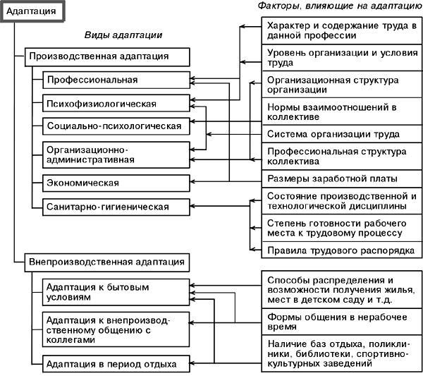adaptacija personala sistema metody i vidy adaptacii rabotnikov e447dc9